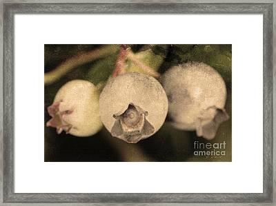 Blueberries On Bush Sepia Tone Framed Print by Iris Richardson