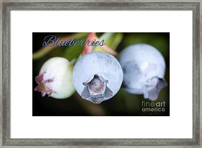 Blueberries On Bush Trio Framed Print by Iris Richardson