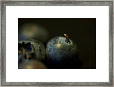 Blueberries Framed Print by Simone Ochrym