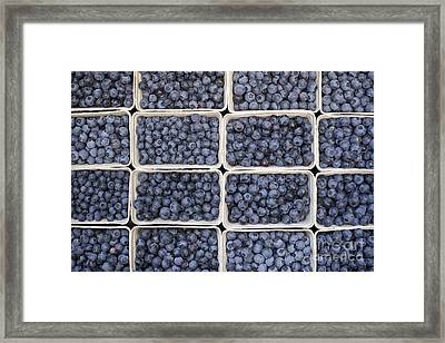 Blueberries Framed Print by Tim Gainey