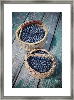 Blueberry Baskets Framed Print by Edward Fielding