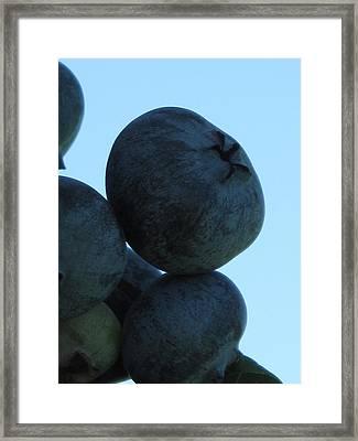 Blueberry Boulder Framed Print