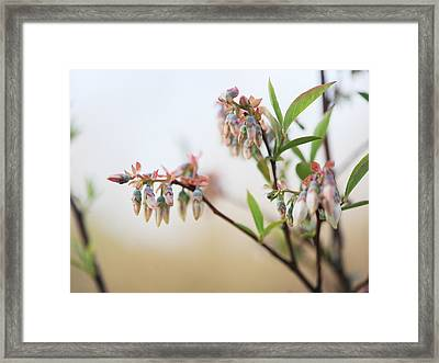 Blueberry Bush Framed Print by Giffin Photography
