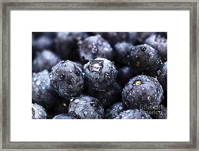 Blueberry Close Up Framed Print by John Rizzuto