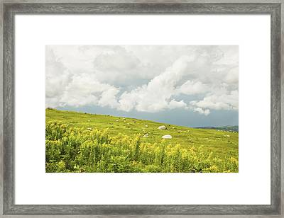 Blueberry Field And Goldenrod With Dramatic Sky In Maine Framed Print