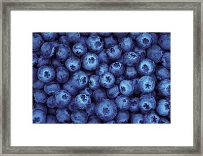 Blueberry Harvest Framed Print by Greg Vaughn