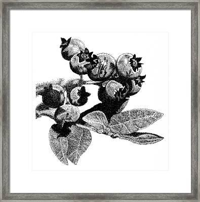 Blueberry Framed Print by Rob Christensen