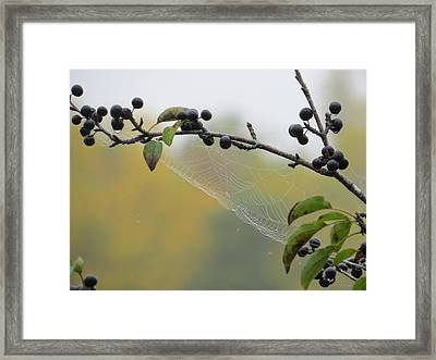 Framed Print featuring the photograph Blueberry Web by Nikki McInnes