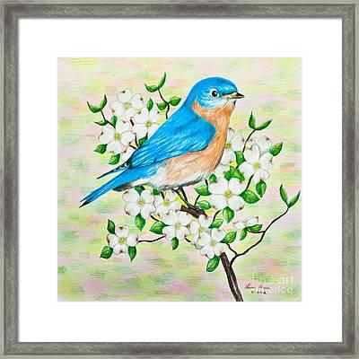 Bluebird And Dogwood Framed Print by Lena Auxier
