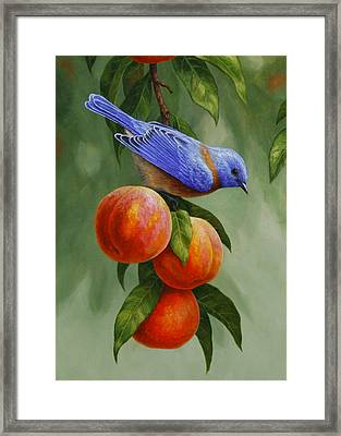 Bluebird And Peaches Greeting Card 1 Framed Print