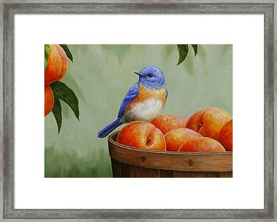 Bluebird And Peaches Greeting Card 3 Framed Print