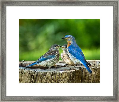 Bluebird - Father And Sons Framed Print