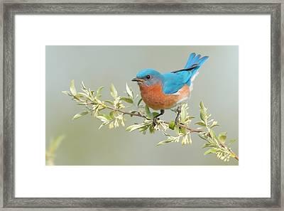 Bluebird Floral Framed Print