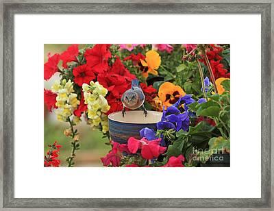 Bluebird Garden Framed Print by Luana K Perez
