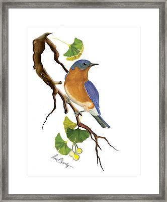 Bluebird In Ginkgo Tree Framed Print