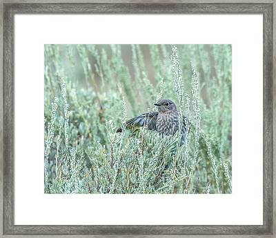 Bluebird In Sage Framed Print