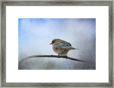 Bluebird In The Snow Framed Print