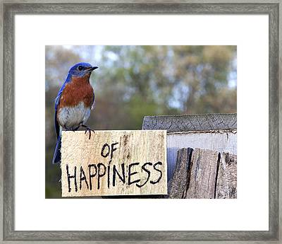 Framed Print featuring the photograph Bluebird Of Happiness by John Crothers