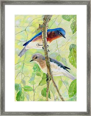Bluebird Pair Framed Print