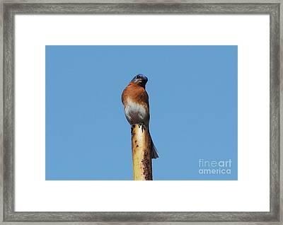 Bluebird Framed Print by Theresa Willingham