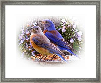 Bluebird Wedding Framed Print