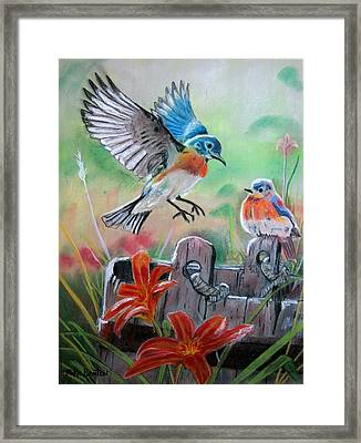 Bluebirds Bucket Framed Print