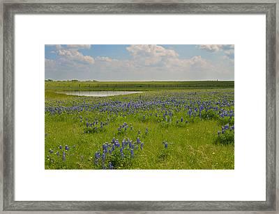 Bluebonnet Bliss Framed Print