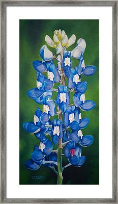 Bluebonnet Buffalo Clover Framed Print by Dee Dee  Whittle