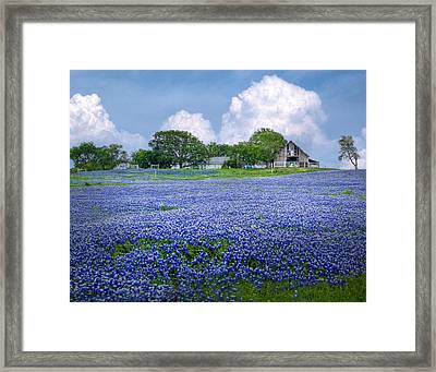 Bluebonnet Farm Framed Print