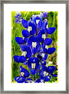 Bluebonnet Framed Print by Kathy Churchman