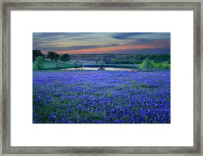 Bluebonnet Lake Vista Texas Sunset - Wildflowers Landscape Flowers Pond Framed Print