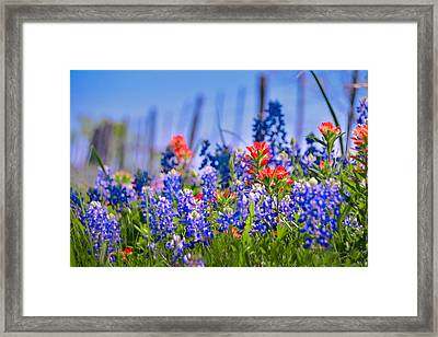 Framed Print featuring the photograph Bluebonnet Paintbrush Texas  - Wildflowers Landscape Flowers Fence  by Jon Holiday