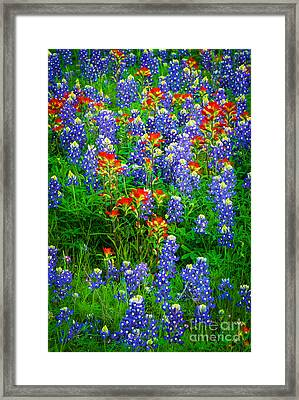 Bluebonnet Patch Framed Print