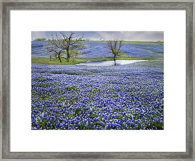 Bluebonnet Pond Framed Print