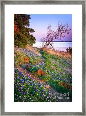 Bluebonnet Trail Framed Print by Inge Johnsson