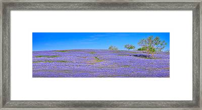 Framed Print featuring the photograph Bluebonnet Vista Texas  - Wildflowers Landscape Flowers  by Jon Holiday