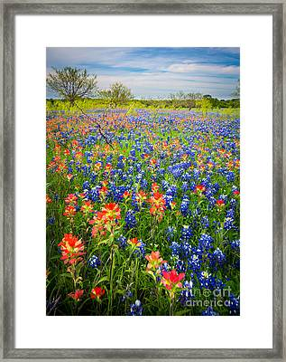 Bluebonnets And Prarie Fire Framed Print by Inge Johnsson