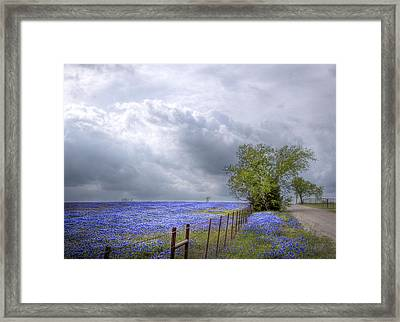 Bluebonnets And Spring Rain Framed Print by David and Carol Kelly