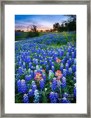 Bluebonnets Forever Framed Print