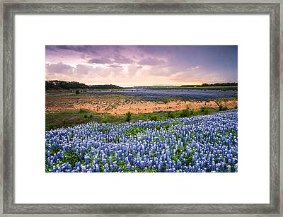 Bluebonnets On The Colorado River Bank - Wildflower Field In Texas Framed Print by Ellie Teramoto