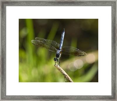 Bluedasher-0134 Framed Print