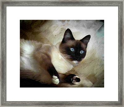 Blueeyed And Brownmasked Framed Print by Gun Legler