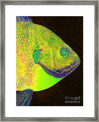 Bluegill Fish P28 Framed Print