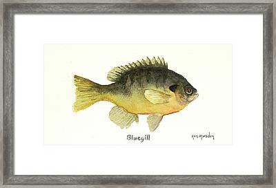 Bluegill Framed Print
