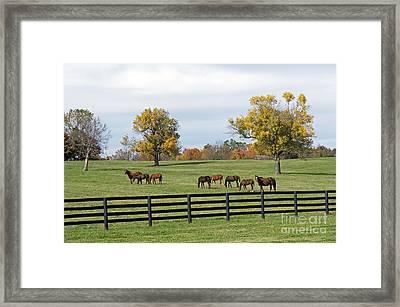 Bluegrass Autumn Framed Print by Roger Potts