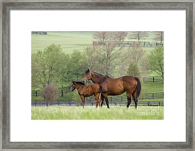 Bluegrass Family - D002766 Framed Print