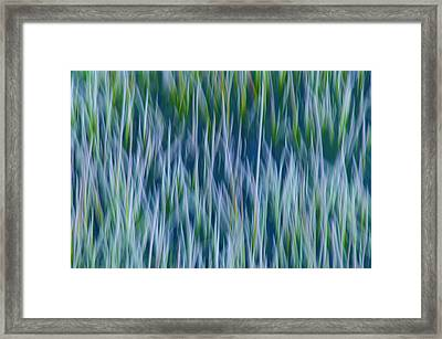 Framed Print featuring the photograph Bluegrass  by Sherri Meyer