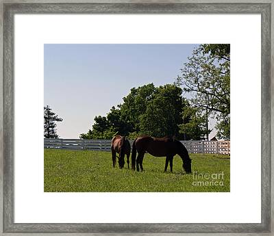 Bluegrass Summer Day Framed Print by Roger Potts