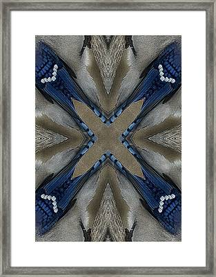 Bluejay Feathers Framed Print