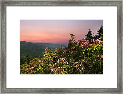 Blueridge Parkway Mountain Laurel Framed Print by Randall Branham